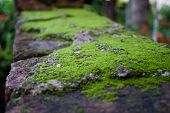 Green moss on the bricks