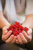 Freshly Fruits Red Currant Hands Man