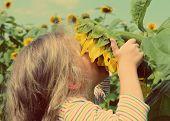 little girl smelling flower of sunflower - vintage retro style