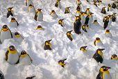 Plastic Penguins