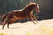 beautiful horse running on the field