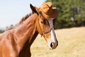 cute horse wearing a cowboy hat