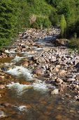 Quick creek with clean and cold water. The creek flows through a dense coniferous forest