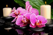 Spa Concept Of Zen Stones With Drops, Blooming Twig Stripped Violet Orchid (phalaenopsis), Candles,