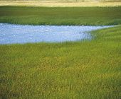 stock photo of marsh grass  - Marsh Grass and Blue Water - JPG