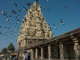 picture of belur  - Birds flying across the tower of the Belur temple in Karnataka India - JPG