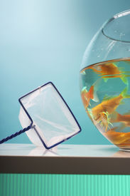stock photo of fishbowl  - Goldfishes in fishbowl and net - JPG