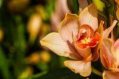 Beautiful Orange Orchid Flowers