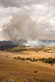Trees Ablaze While Bison Watch In Yellowstone