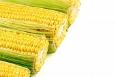 Macro Background Texture Of Tasty, Juicy Corn