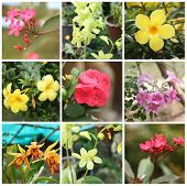 Tropical Plants And Flowers