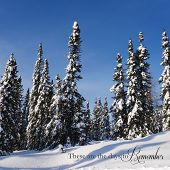 picture of blanket snow  - scenic instagram of trees covered in snow in wintertime on a clear day with words - JPG