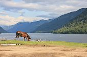 A horse grazes ashore lake.