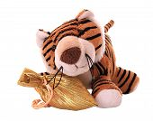 stock photo of tiger cub  - New - JPG