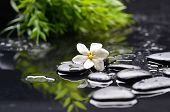 foto of gardenia  - Beautiful gardenia with green leaf and therapy stones  - JPG