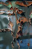 Metal Surface With Rust And Graffiti