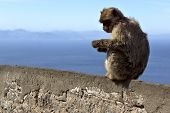 Monkey Sitting On A Stone Fence On The Background Of The Sea