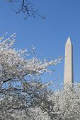 stock photo of obelisk  - The Washington Memorial was built to commemorate George Washington (The first USA president) and it is the biggest obelisk and the world largest stone structure. ** Note: Visible grain at 100%, best at smaller sizes - JPG