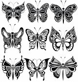 pic of butterfly  - Collection of Butterfly  for your design - JPG
