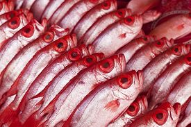 picture of bigeye  - Group of Kapok fish, bigeye, in a seafood market