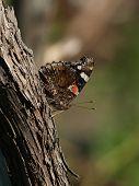 Butterflyprofile1