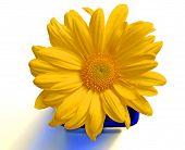 Yellow Flower W/Colbalt Blue Vase