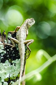 stock photo of lizards  - emma gray - JPG