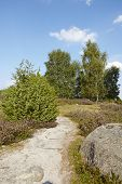 Постер, плакат: Luneburg Heath Small Path And Stone In The Heathland
