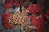 Baseball Glove F