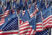 image of waving american flag  - field of american flags honoring our veterans on verterans day
