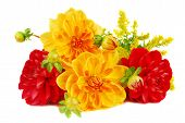 Bouquet Of Dahlia Flowers Isolated On White Background