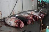 Slicing a tuna in the fish shop
