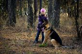 stock photo of german shepherd  - The girl in an autumn pine wood walks with the German shepherd - JPG