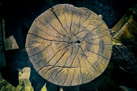 stock photo of lumber  - Woodpile of cut Lumber for forestry industry - JPG