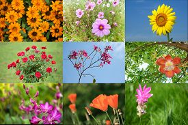 stock photo of cannonball-flower  - Collage of colorful flowers in nature background - JPG