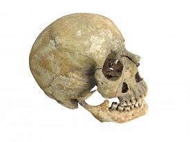 pic of cranium  - Old archaeological find human skull cranium isolated on white background - JPG