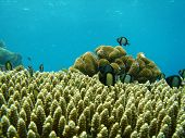 Coral And Fish In Indonesia