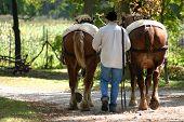 2 Horses, 1 Man