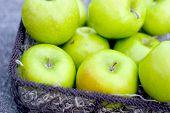 fresh picked green apples