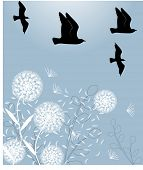 dandelions with birds vector