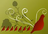 birds (quail) vector series