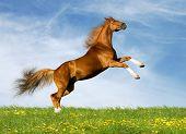 caballo castaño bávaro