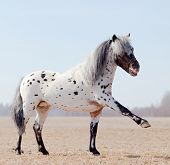 stock photo of horse head  - Horse with raised leg in field - JPG