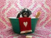 Dog Bath. A happy Shiz Tsu  dog ready to take a bath in the tub. He is wearing a shower cap and has  poster