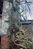 Tree Grew Out Of Brickwork poster