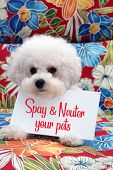 Bichon Frise. Bichon Frise dog with a Hawaiian pattern background. Pet Portrait. Spay and Neuter  poster