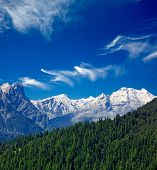 Himalaya y bosque. India