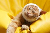 stock photo of bandage  - cat ear ache with bandage at home - JPG
