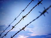 stock photo of barbed wire fence  - Photo of barbed wire against evening sky - JPG