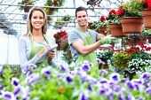 Florists couple working with flowers at a greenhouse. Gardening.
